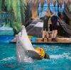 Дельфинарии, океанариумы в Новобратцевском
